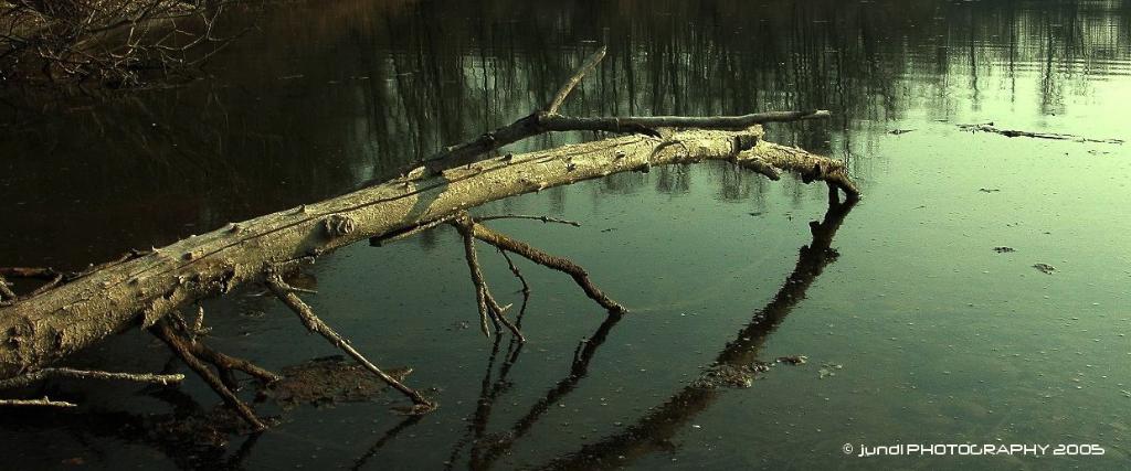 jundl,photo,landscapes