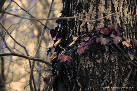 jundl,photography,nature